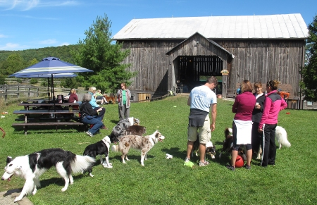 Campers and guardians socializing in the barn yard.
