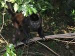 monkey_0907