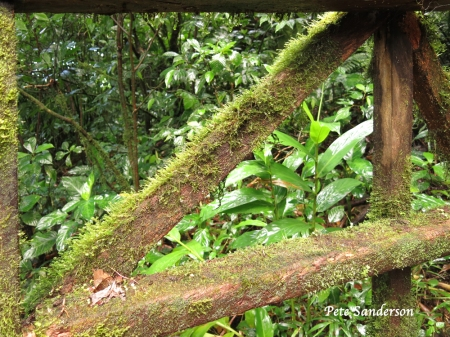 We conditions in the Cloud Forest causes growth everywhere.