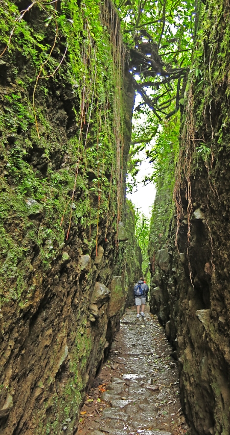 This cut was human made but is being taken over by the Cloud Forest. The walls were inhabited by all kinds of critters.