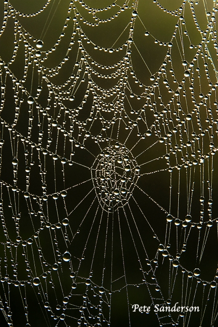 Jeweled Spider Web, George W. Mead Wildlife Area